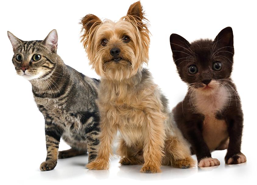 Ballantyne Modern Pet Salon